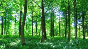 Waldschutz_trevor-pye-KyaoT3NKN2s-unsplash_DOK